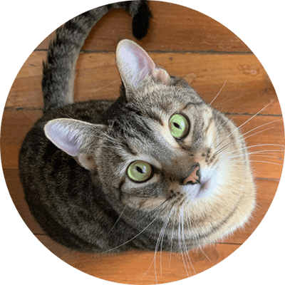 Bao the cute cat