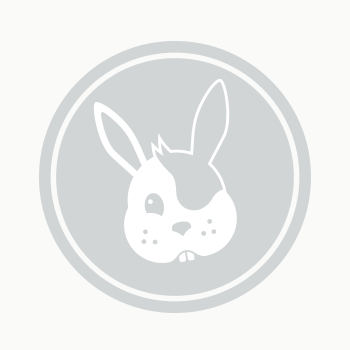 Dusty -  Rabbit