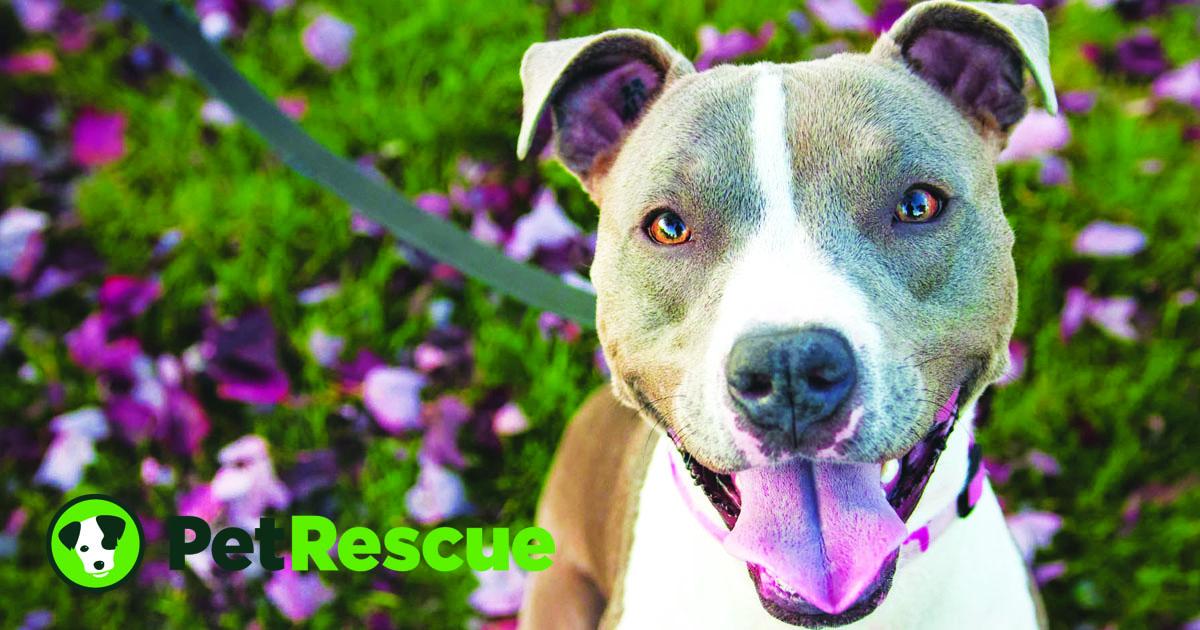 PetRescue - Create happiness  Save lives  - PetRescue