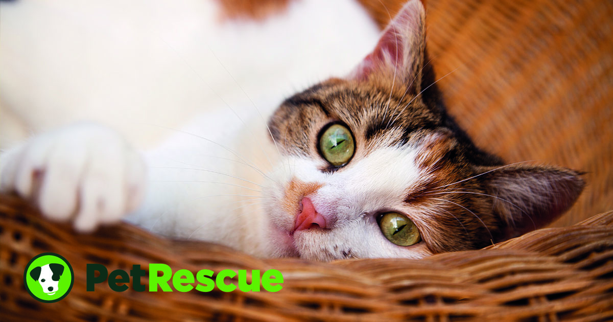PetRescue , Create happiness. Save lives. , PetRescue