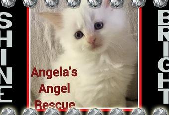 Angela's Angel Rescue