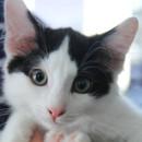 Photo of Monk Cat