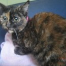 Photo of Jacinta   A Rare Jewel Of A Cat