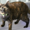 Photo of Princess * Adopt Or Foster