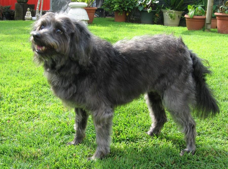 Fraser Coast Dog Rescue