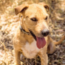 Photo of Ricky * Foster Or Adopt