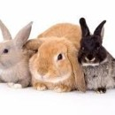 Photo of Superstar Special Bunny Families Wanted!