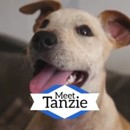 Photo of Tanzie * On Trial With Her New Family