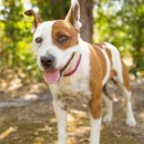 Photo of Cindy *Adopt Or Foster