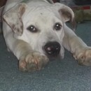Photo of Daisy Urgent Foster Care Needed!
