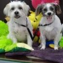 Photo of Daisy & Ruby