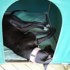 """Photo of """"Alfie"""", Cat Tolerant. Canberra"""