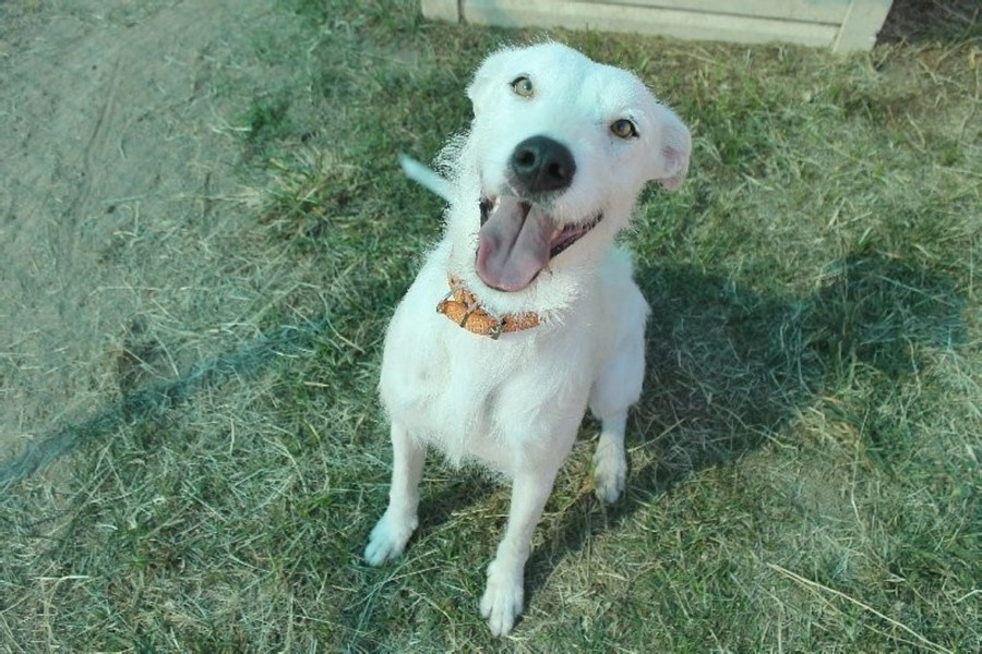 Rescue Dog Townsville