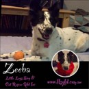 Photo of Zeeba