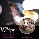 Photo of Whippi