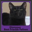 Photo of Dionysus