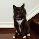 Photo of Kirby *Adoption Pending*