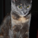 Photo of Bluebell