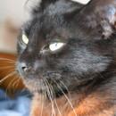 Photo of Ruby Gloom