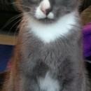 Photo of Lupin