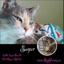 Photo of Sugar