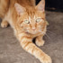 Photo of Ginger Meggs