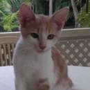 Photo of Araminta