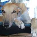 "Photo of ""Curly"", Lanky, Loopy And Lovely. Brisbane"