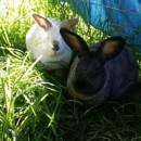 Photo of Apollo & Elsa