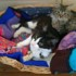 No photo for Mum Cat And Kitten