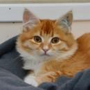 Photo of Asoka