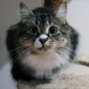 Photo of Mikasa