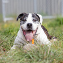 Photo of Butch * Adopt Or Foster