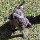 Photo of Atticus
