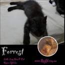Photo of Forrest