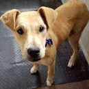 Photo of Goldie D0651