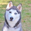 Photo of Shameka