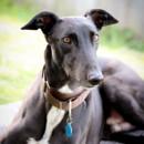 "Photo of ""Beau"", Warmth And Humility. Brisbane"