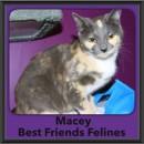 Photo of Macey