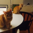 Photo of Butterscotch And Jamdrop