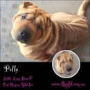 Photo of Polly