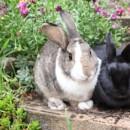 Photo of Bessie & Houdini   Adopt Us!