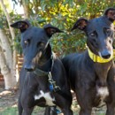 """Photo of """"Rebah And Bolt"""", Two Peas In A Pod. Brisbane"""