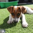 Photo of Mimi *No More Calls Please, Adoption In Process