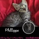 Photo of Phillipe