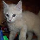 Photo of Magnus