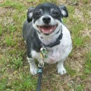 Photo of Sasha (No More Applications Please)