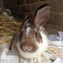 Photo of Shay