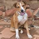 Photo of Daisy (D3492)