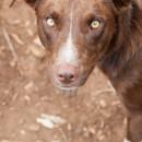 Photo of Rusty6